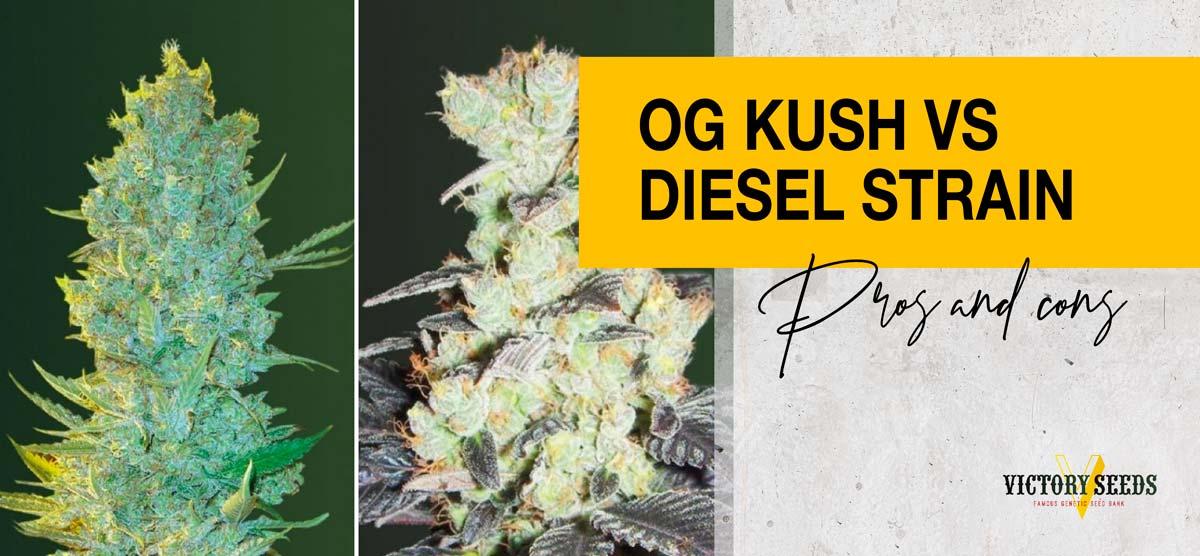 OG Kush VS Sour Diesel - Pros & Cons