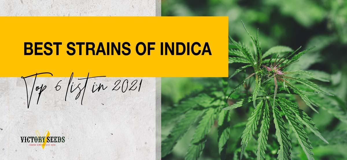 List of Best Indica strains for 2021