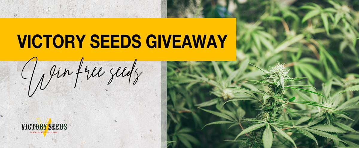 Victory Seeds Giveaway